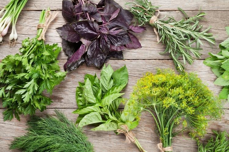 Травы в кулинарии