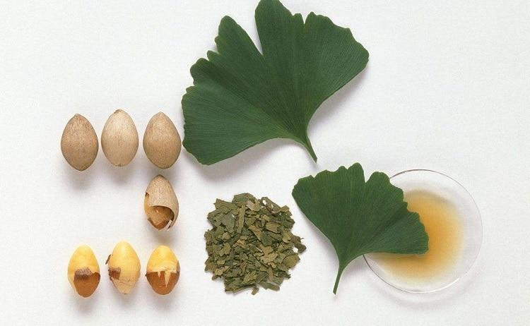 Листья и плоды гинкго билоба